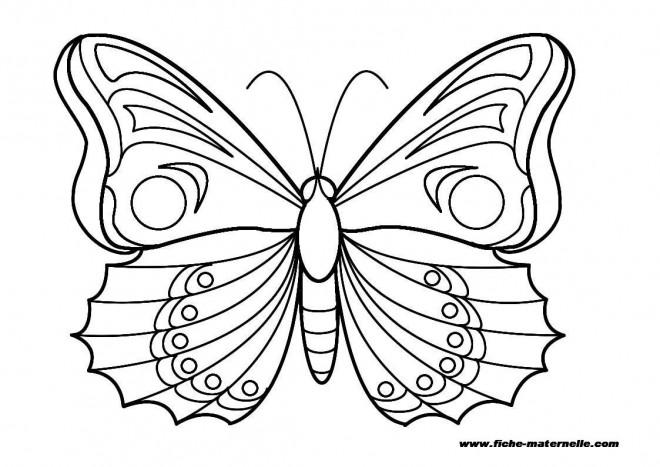 Coloriage et dessins gratuits Papillon Maternelle magnifique à imprimer