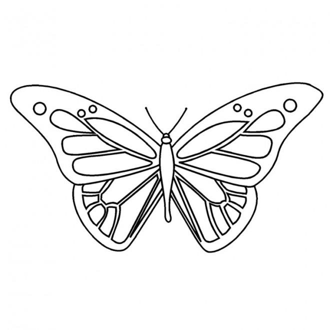 Coloriage papillon maternelle vue de face dessin gratuit - Papillon maternelle ...