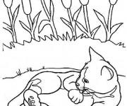 Coloriage et dessins gratuit Chat Mignon se nettoie à imprimer