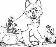 Coloriage et dessins gratuit Chien loup à imprimer