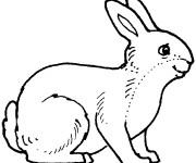 Coloriage et dessins gratuit Lièvre maternelle à imprimer