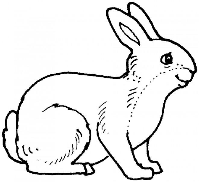 Coloriage et dessins gratuits Lièvre maternelle à imprimer