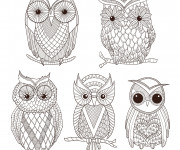 Coloriage Destressant Art Hibou