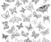 Coloriage Zen Papillons Magnifiques