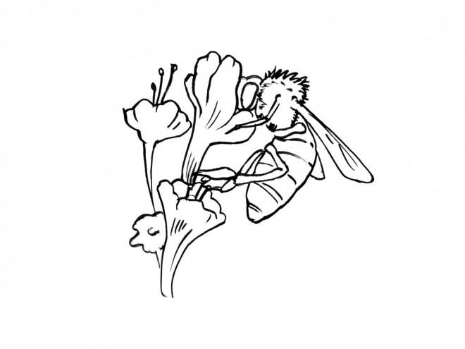 Coloriage et dessins gratuits Abeille maternelle à imprimer