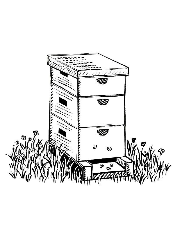Coloriage et dessins gratuits Abeille Ruche à imprimer