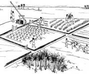 Coloriage et dessins gratuit Agriculture en Chine à imprimer