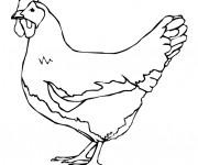Coloriage et dessins gratuit Agriculture Poulet à imprimer
