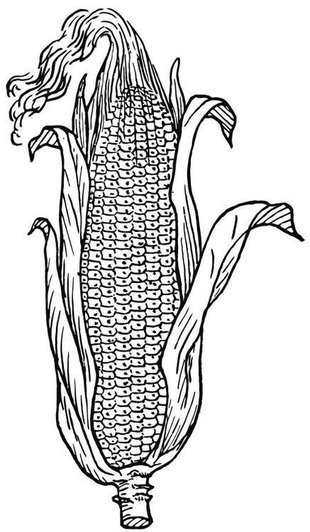 Coloriage et dessins gratuits Agriculture Soja à imprimer