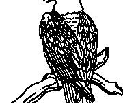 Coloriage dessin  Aigle 13