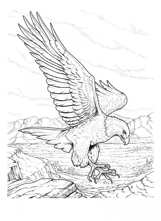 Coloriage et dessins gratuits Aigle à télécharger à imprimer