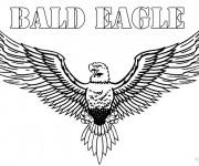 Coloriage Aigle à tête blanche