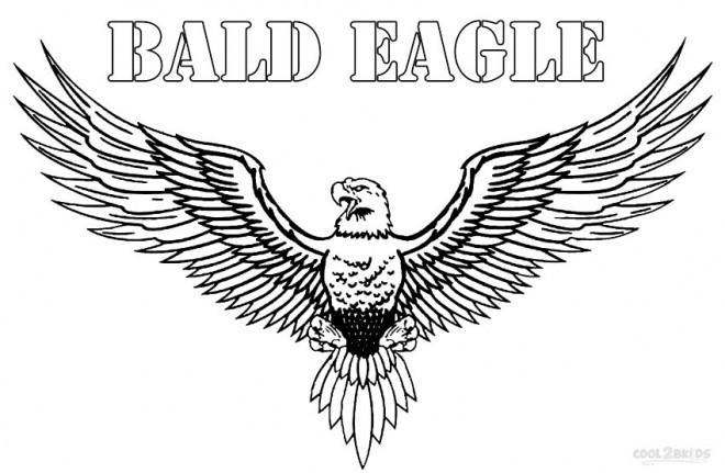 Coloriage et dessins gratuits Aigle à tête blanche à imprimer