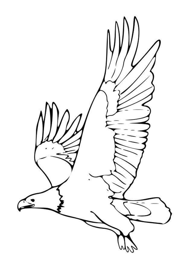 Coloriage et dessins gratuits Aigle américain en train de voler à imprimer