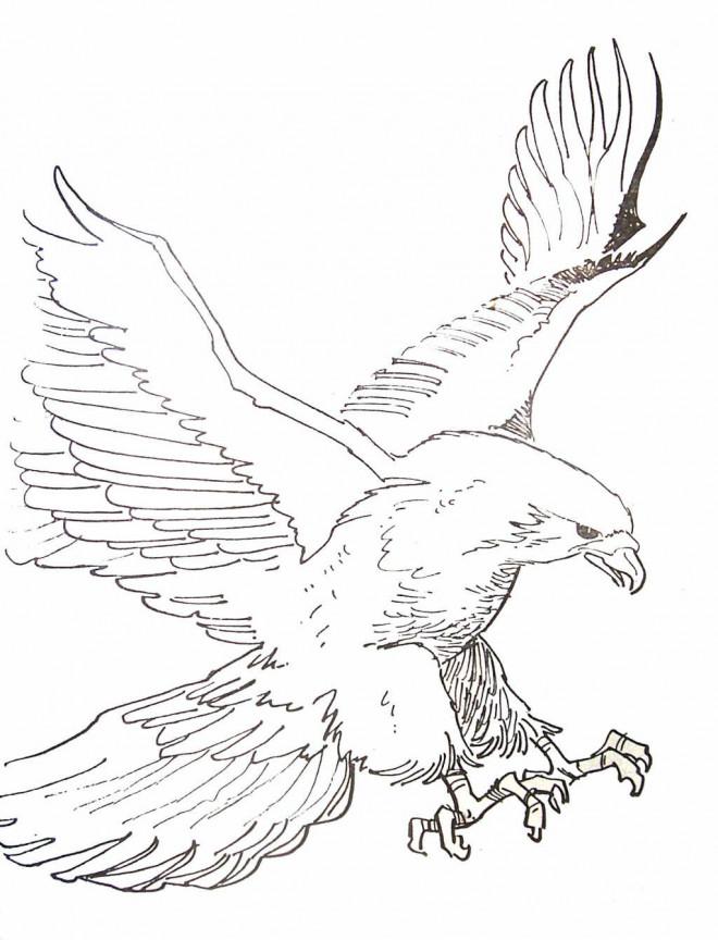 coloriage aigle au crayon d 39 un aigle ouvrant ses ailes. Black Bedroom Furniture Sets. Home Design Ideas