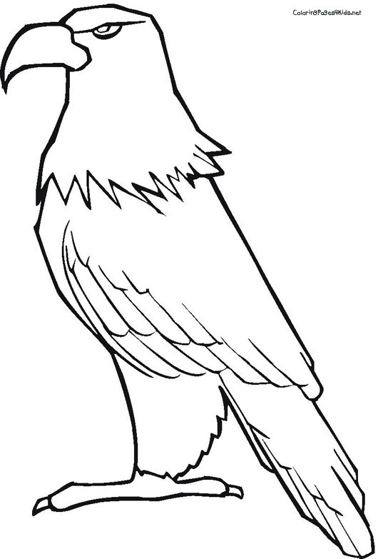 Coloriage et dessins gratuits Aigle avec le regard sérieux à imprimer