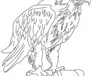 Coloriage Aigle avec yeux en noir