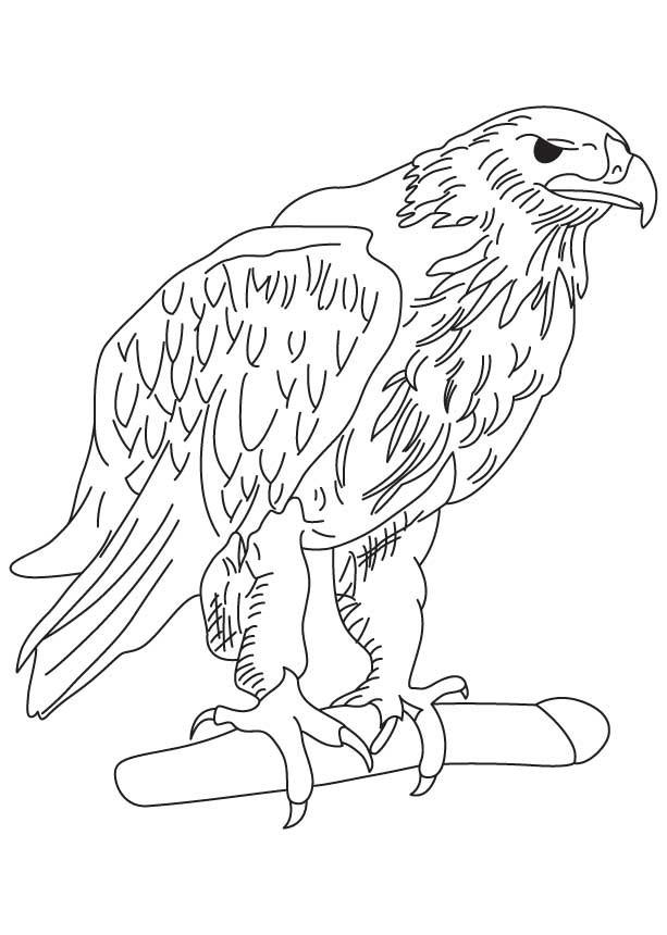 Coloriage et dessins gratuits Aigle avec yeux en noir à imprimer
