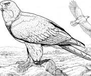 Coloriage et dessins gratuit Aigle dans la nature à imprimer