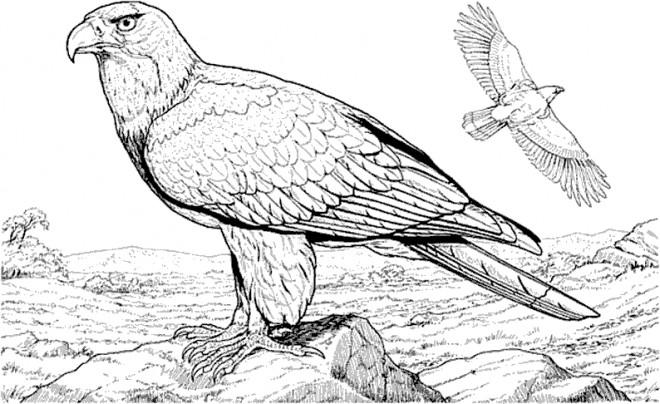 Coloriage et dessins gratuits Aigle dans la nature à imprimer