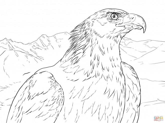 Coloriage et dessins gratuits Aigle de face à imprimer