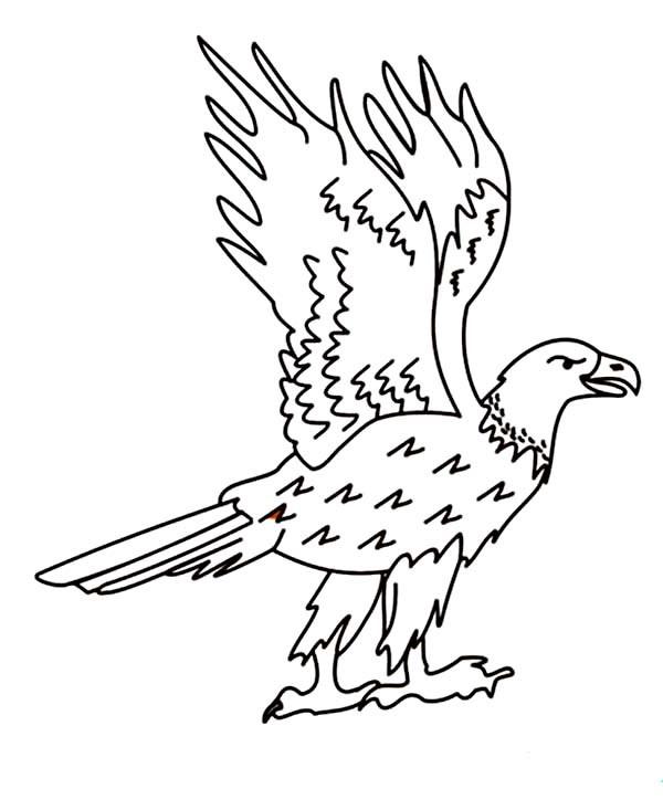 Coloriage et dessins gratuits Aigle debout à imprimer