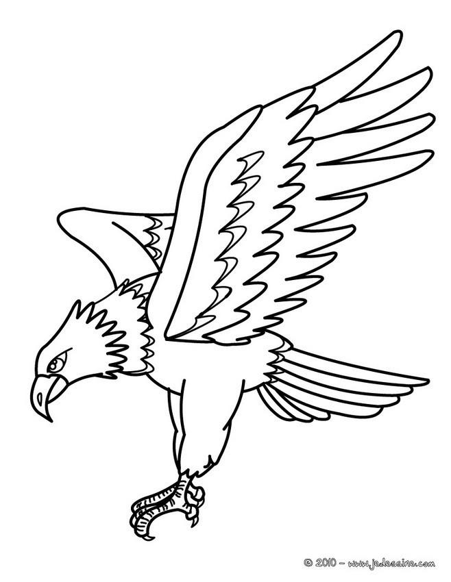 coloriage aigle en chasse dessin gratuit imprimer. Black Bedroom Furniture Sets. Home Design Ideas