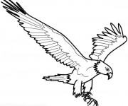 Coloriage Aigle en l'air