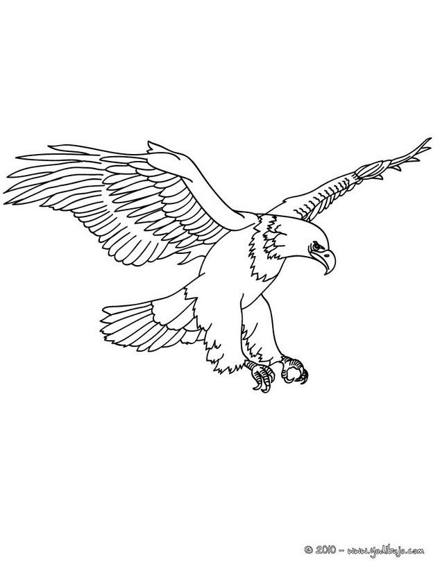 Coloriage et dessins gratuits Aigle en train de surveiller à imprimer