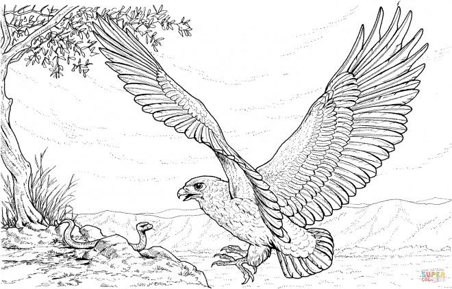 Coloriage et dessins gratuits Aigle et le serpent à imprimer