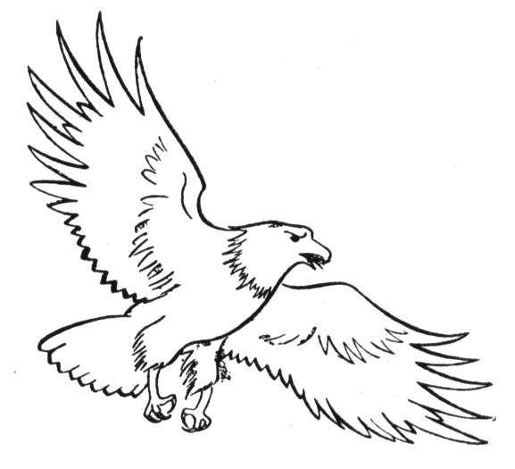 Coloriage et dessins gratuits Aigle et ses  ailes ouvertes à imprimer