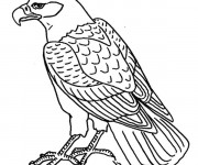 Coloriage Aigle facile