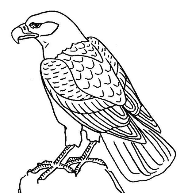Coloriage et dessins gratuits Aigle facile à imprimer