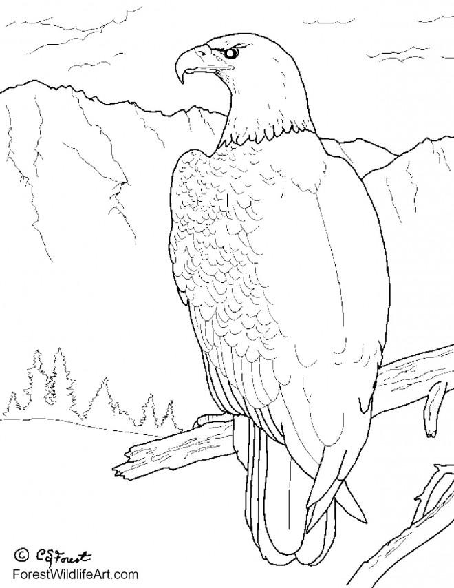 Coloriage et dessins gratuits Aigle prédateur à imprimer