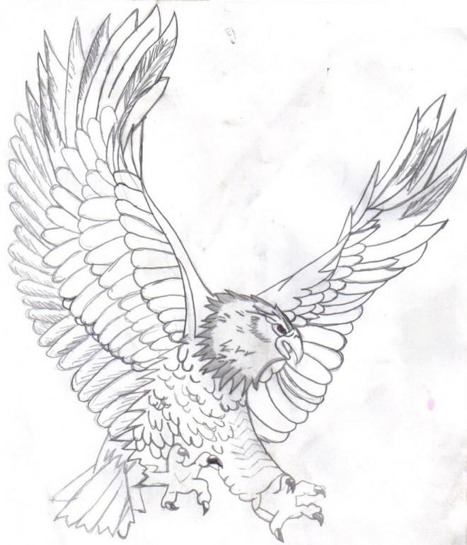 Coloriage et dessins gratuits Aigle qui ouvre ses ailes au crayon à imprimer