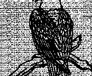 Coloriage et dessins gratuit Aigle sur l'arbre à imprimer