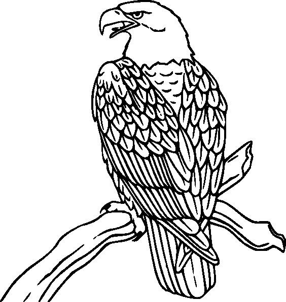 Coloriage et dessins gratuits Aigle sur l'arbre à imprimer