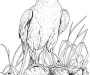 Coloriage aigle sur rocher dessin gratuit imprimer - Dessin rocher ...