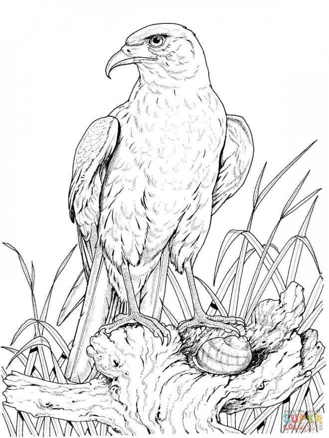 Coloriage aigle sur rocher dessin gratuit imprimer - Dessin de aigle ...