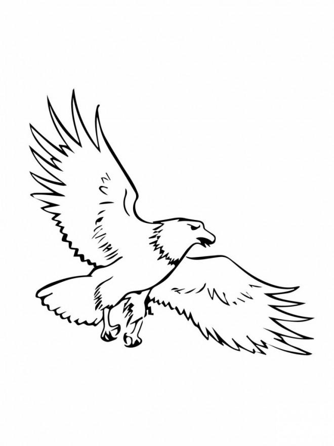 Coloriage et dessins gratuits Aigle vecteur à imprimer