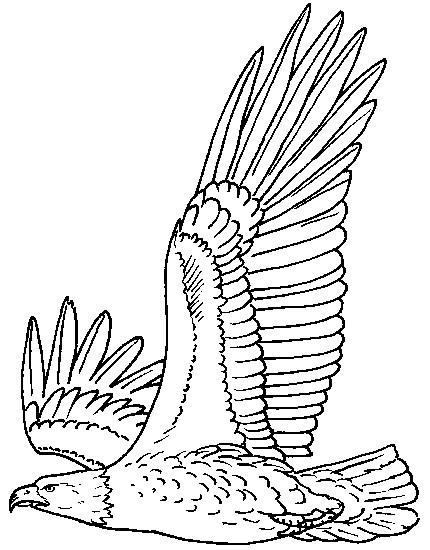 coloriage les ailes d 39 aigle dessin gratuit imprimer. Black Bedroom Furniture Sets. Home Design Ideas
