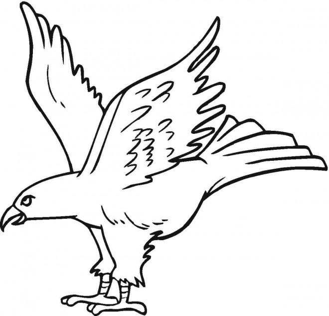 Coloriage et dessins gratuits Un beau Aigle en vol à imprimer