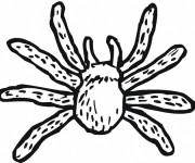 Coloriage dessin  Araignee 15