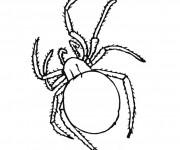 Coloriage dessin  Araignee 4