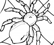 Coloriage et dessins gratuit Araignée Adulte à imprimer