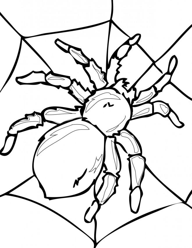 Coloriage et dessins gratuits Araignée Adulte à imprimer