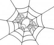 Coloriage Araignée attend sa victime