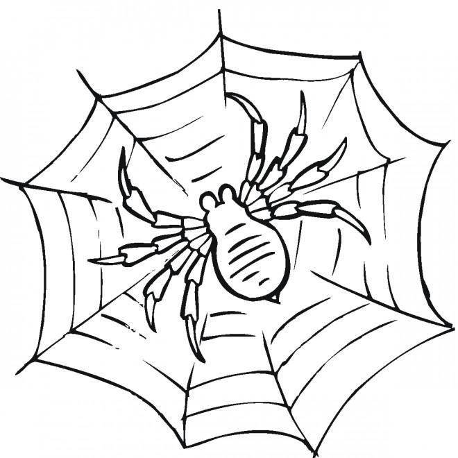 Coloriage et dessins gratuits Araignée attend sur La toile à imprimer