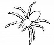 Coloriage et dessins gratuit Araignée de mer à imprimer