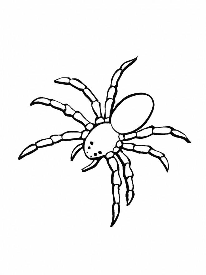 Coloriage et dessins gratuits Araignée de mer à imprimer